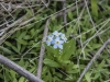 dws_2015.05.20_forget me not_5808